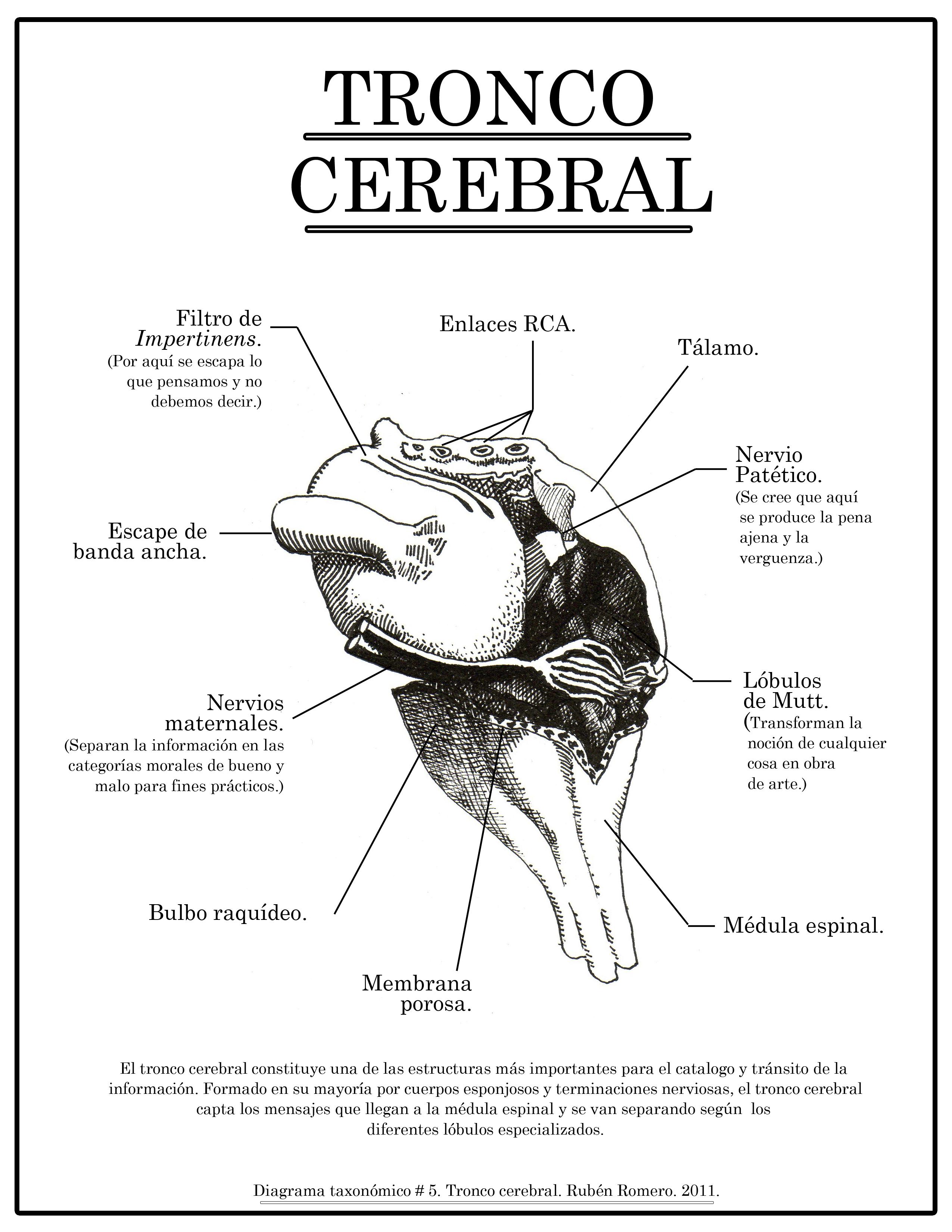 Diagrama taxonómico #5. Tronco cerebral. | Its Mind Project